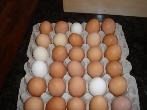Nice eggs!